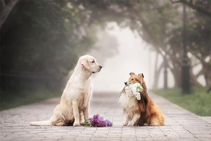 結婚式でのペットの画像