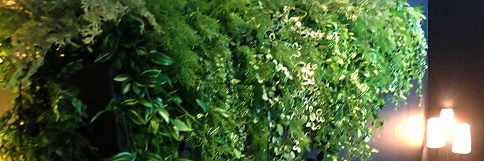 植木とライト